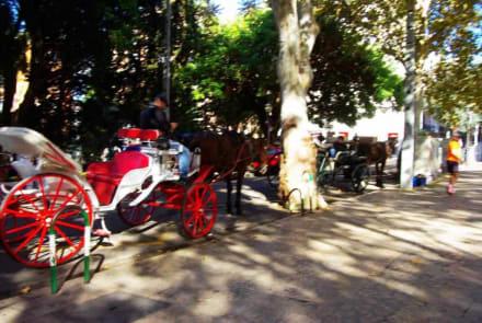 Gegensatz Pferdegespanne - Stadtrundfahrt Palma