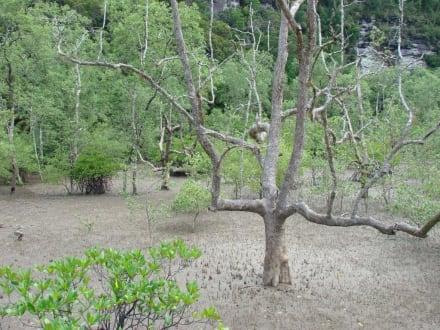 Bako Nationalpark - Bako Nationalpark
