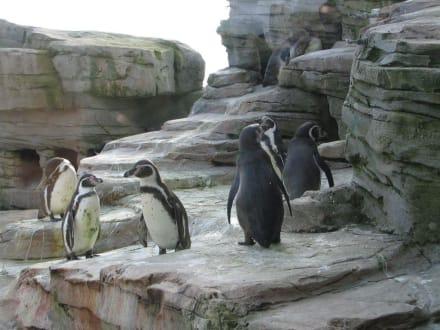Pinguine - Zoo am Meer Bremerhaven