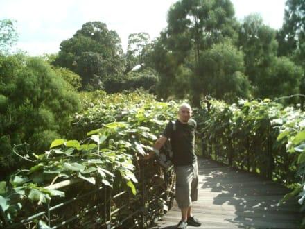 Botanischer Garten - Botanischer Garten Singapur