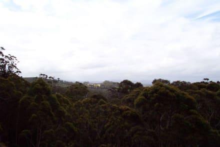 Aussicht zum Horizont vom Catwalk - Tree Top Walk