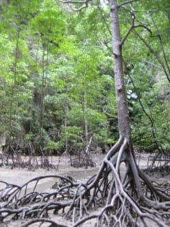 Phang-Nga - Phang Nga Bucht/Nationalpark Ao Phang Nga