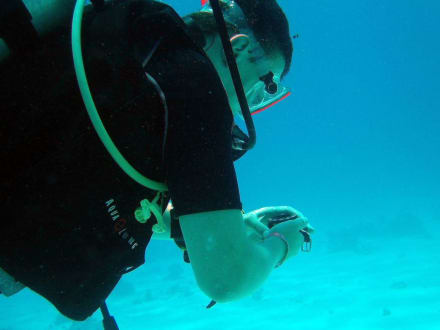 Navigationsübung - Jasmin Diving Center