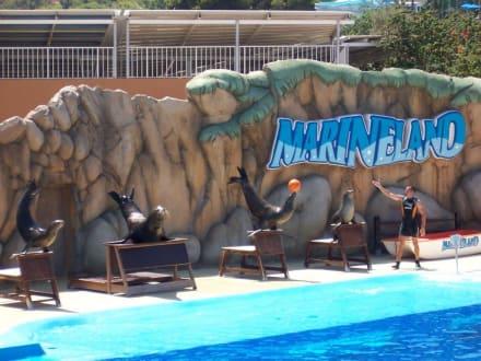 Marineland - Marineland