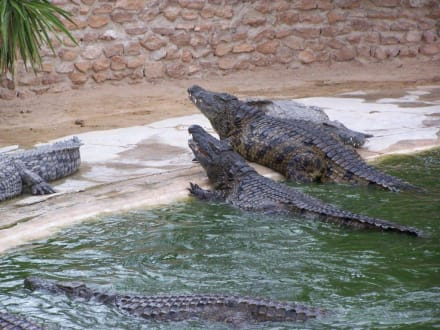 Krokodilfarm - Krokodilfarm