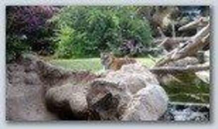 Naturreservat/Zoo - Loro Parque