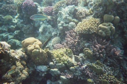 Riff vom Makadi Palace/Grand Makadi - Tauchen Makadi Bay