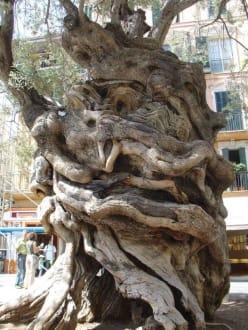 Mallorca - Plaza de Cort
