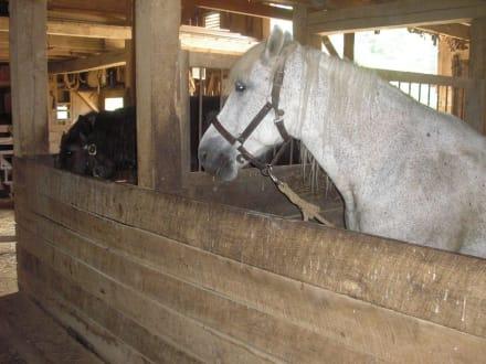 Die Arbeitspferde - Slate Run Living Historical Farm