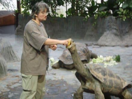 Riesenschildkröte - Zoologischer Garten Prag