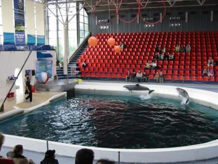 Varna - Bulgarien - Delfinarium Varna