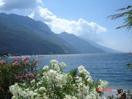 Gardasee mit Blick auf die Alpen - Gardasee