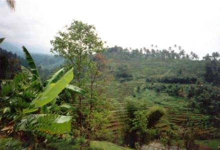 Bali - Reisterrassen - Reisterrassen