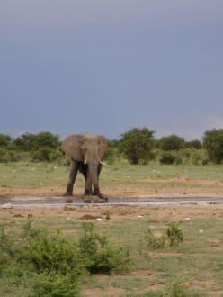 Elefant an ... - Etosha Nationalpark