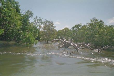Mangroven - Jetski Wet & Wild Diani Beach (geschlossen)