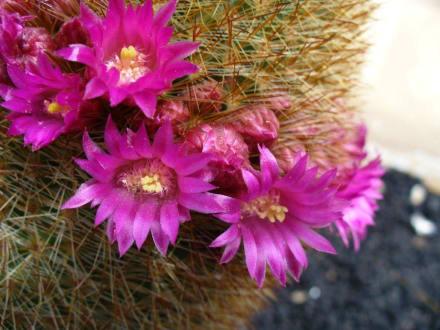 Blütenwelt - Minigolf Santiago ex Jardin de Cactus