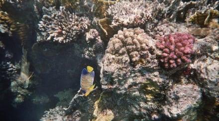 Hausriff Coraya - Schnorcheln Coraya Bay Marsa Alam