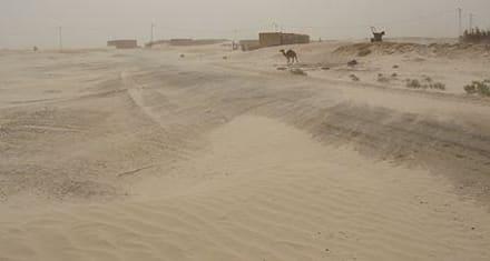 Die Sand-Sturm-Allianz! - dune-desert-discover