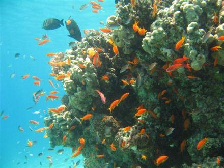 Schnorchtraum im Roten Meer - Schnorcheln Makadi Bay