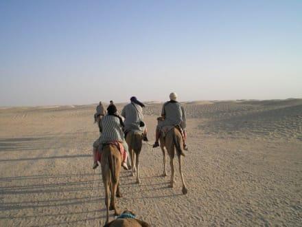 Dromedarritt - Sahara