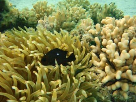 Fische - Sharm el Loli