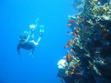 Steven taucht - Tauchen Sharm el Sheikh