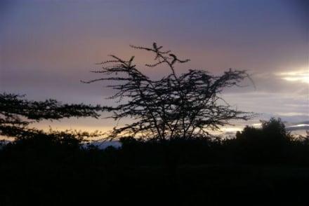 beim Sonnenaufgang - Masai Mara Safari