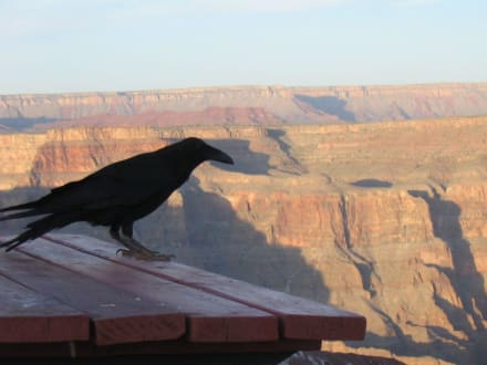 Vogelfrei - Grand Canyon
