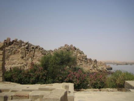 Hier blühen sogar schöne Pflanzen! - Philae Tempel
