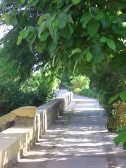 Wege im Garten - Botanischer Garten Assuans - Kitchener Island