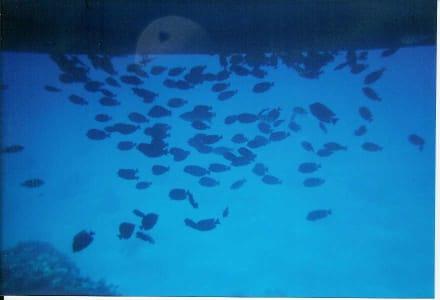 Schattenspender - Schnorcheln Hurghada