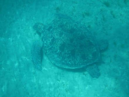 Strand - Schnorcheln Hurghada