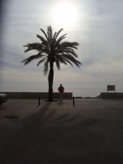 Promenade mit Palme in Cala Millor - Strandpromenade Cala Millor