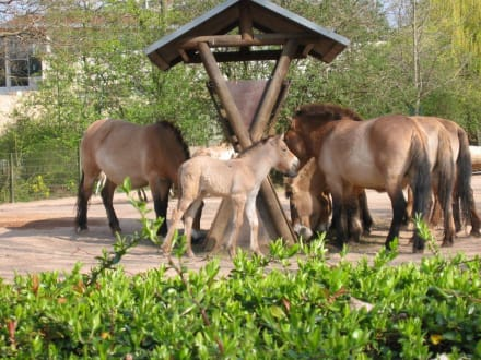 Futterkrippe - Zoologischer Garten Köln