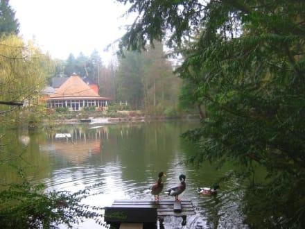 Fischerhütte in Bad Lippspringe - Restaurant Fischerhütte