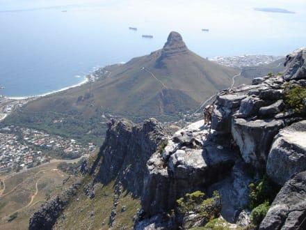 Blick zum Lion´s Head - Tafelberg