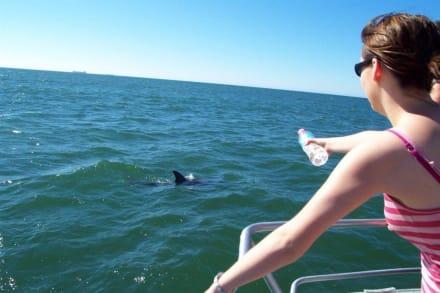 Delphin in Sicht - Delfin Tour Bunbury