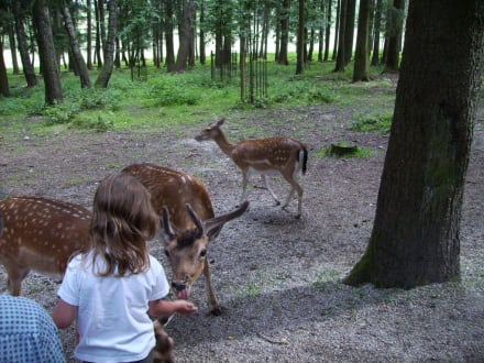 Rehe - Wildpark Poing
