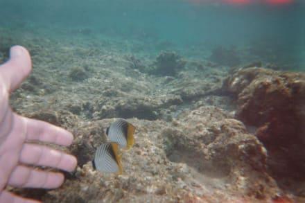 Kleine Fische entdeckt in Strandnähe - Schnorcheln Sharm el Sheikh