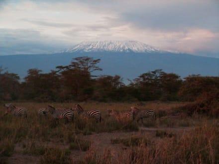 Sea Horse: Unsere Safari - Nationalpark Kilimandscharo / Kilimanjaro