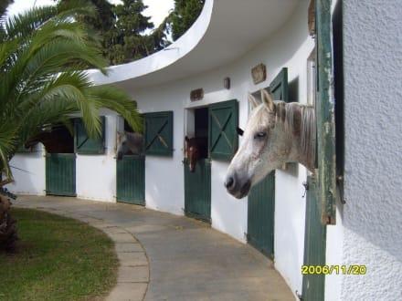 Der Pferdestall. - Reitstall des Hotel Le Sultan