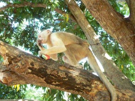 Affe im Botanischen Garten - Ausflüge & Touren