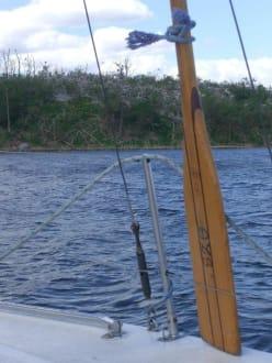 Sonstige Sehenswürdigkeit - Kormoranen Insel