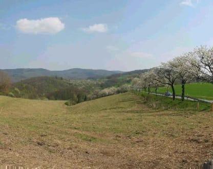 Kirschblüte in der Rühler Schweiz - Weserbergland