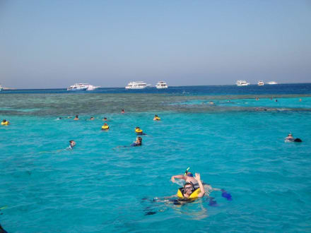 Mahmeya - Tauchsafari King Snefro Spiri Hurghada