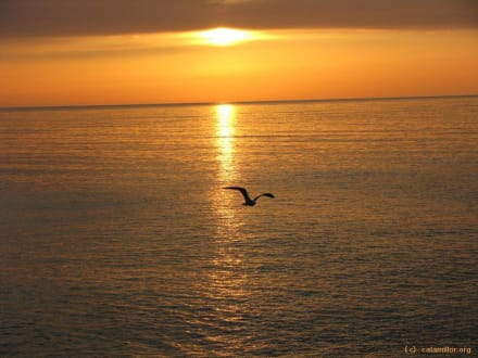 Sonnenaufgang mit Möve - Strand Cala Millor
