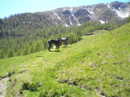 Landeialm - Wandern Ultental