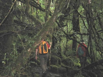 Alerce Andino Nationalpark - Umgebung Puerto Varas