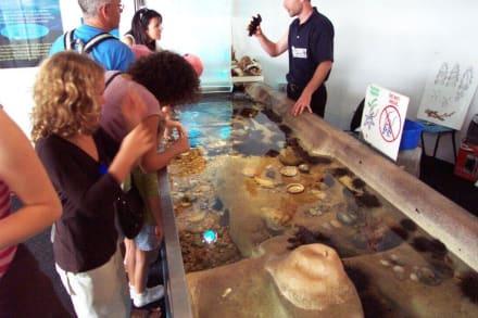 Streichelaquarium - Sydney Aquarium