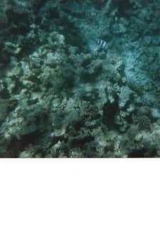 unter Wasser - Giftun / Mahmya Inseln